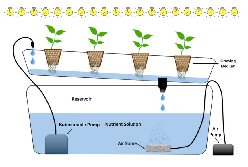 The Secrets of how to grow hydroponics (With Images)