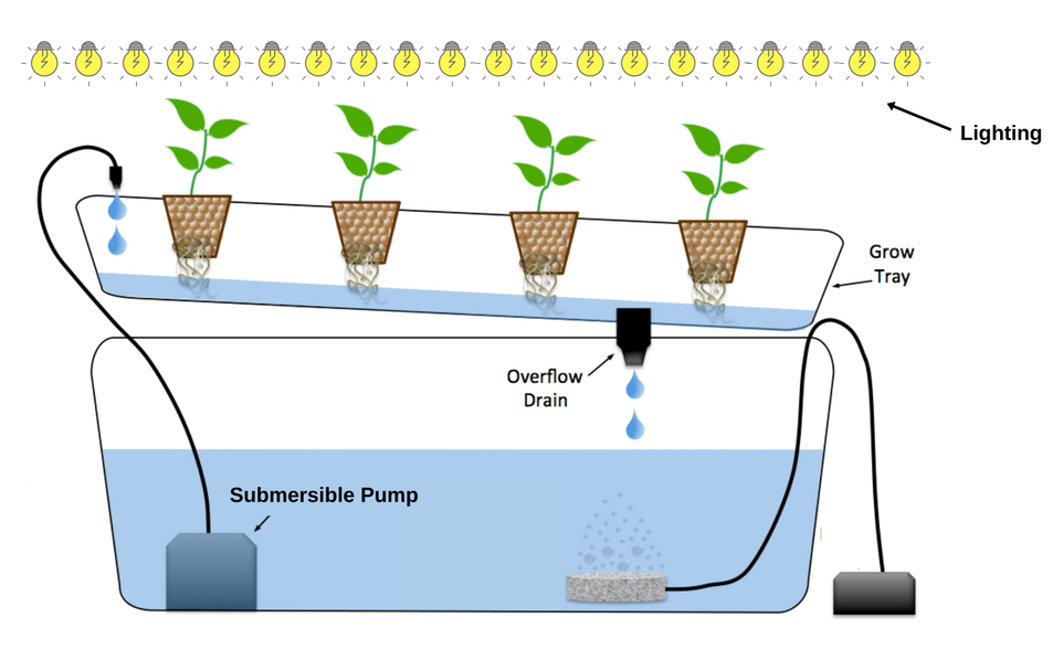 The Secrets Of How To Grow Hydroponics With Images