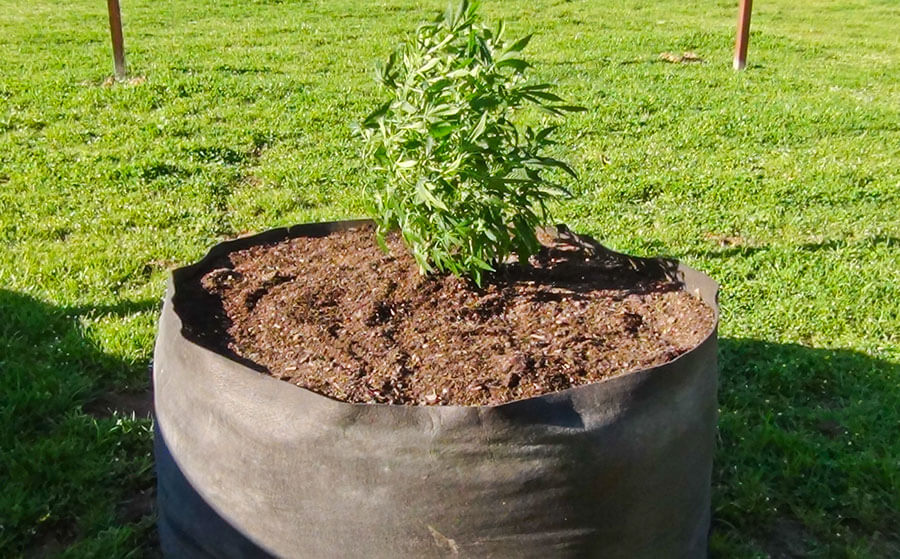 smart pot is floppy
