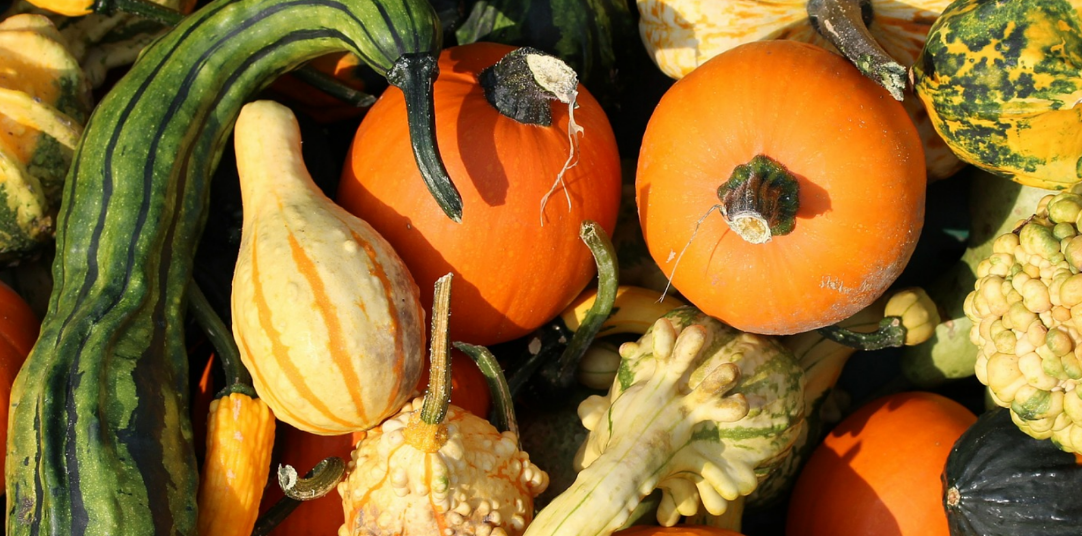 fall_harvest_blogs_with_more_than_just_pumpkins