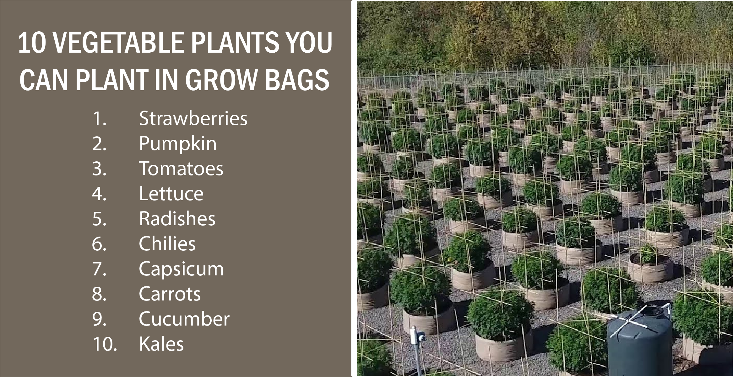 Fabric Grow Bags Complete Guide To Pots 2019